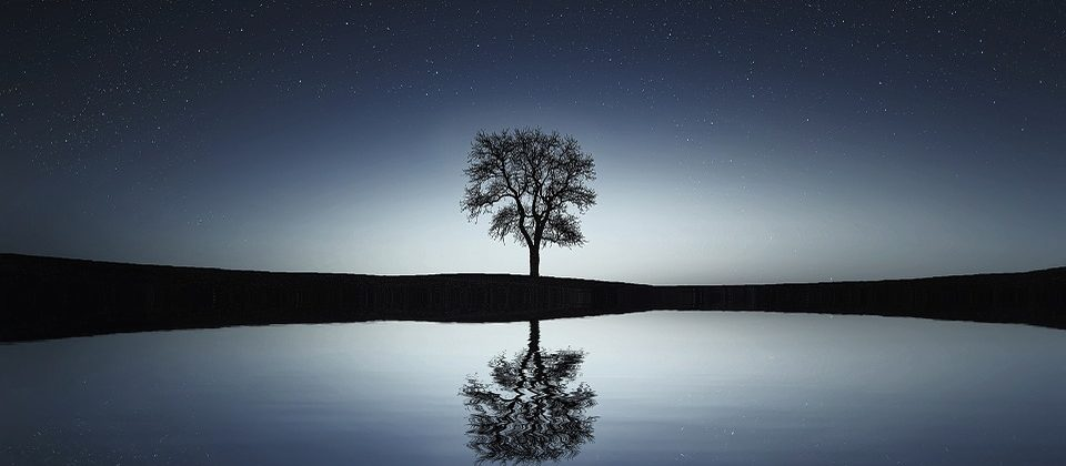 cropped-tree_reflection